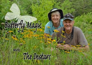 Butterfly-Magic with The Instars.